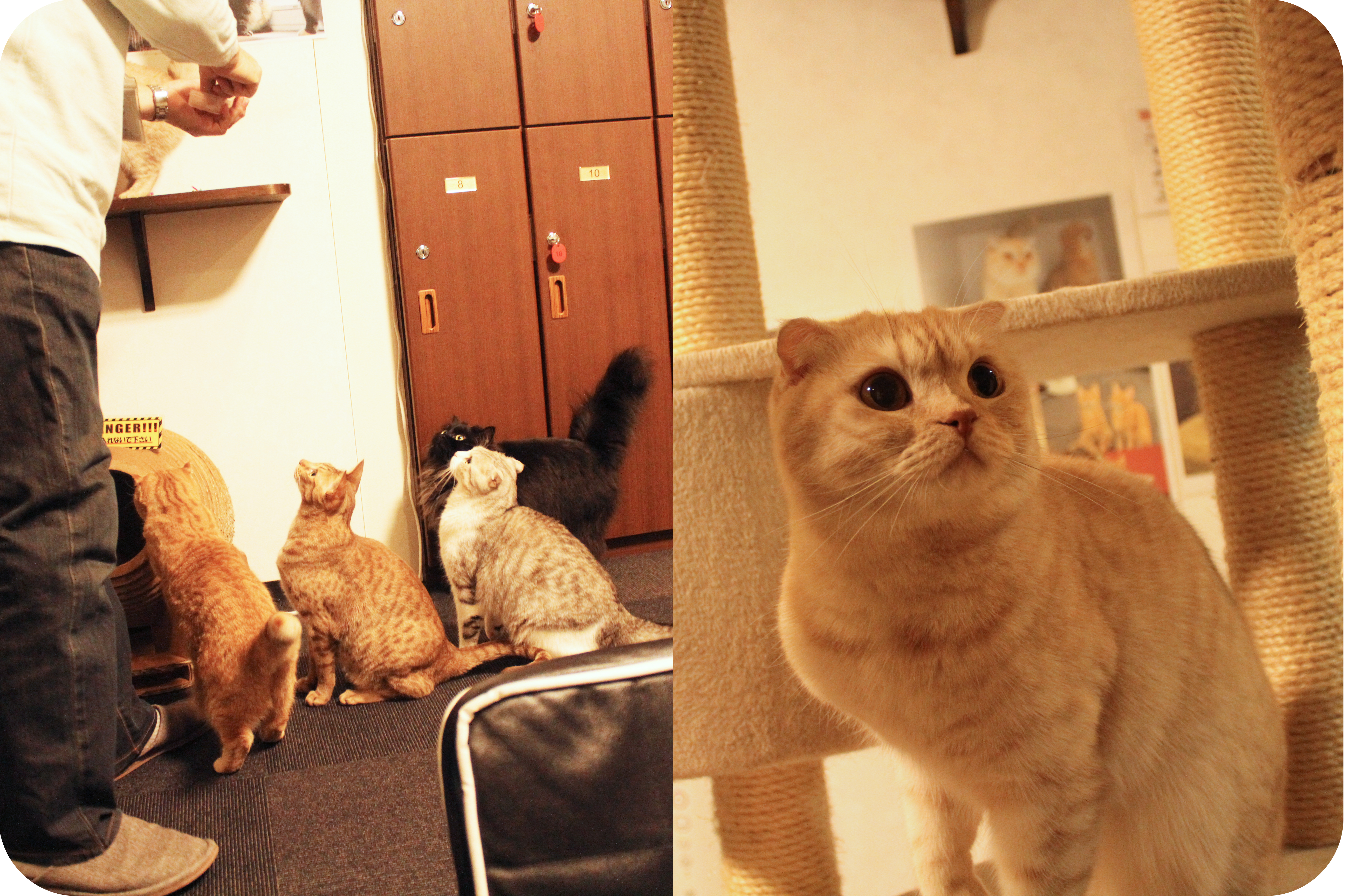 Calico Cat Cafe Tokyo You Rad Thing