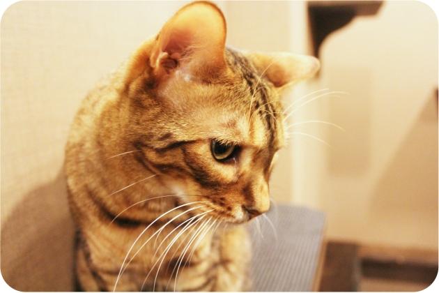Calico-Cat-Cafe-3